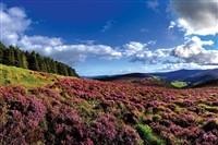 Wicklow Mountains, Gardens & Coast